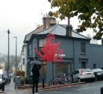 autumn tree stanley road