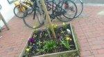 lrb pretty spring
